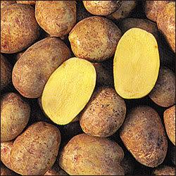 Žlté zemiaky